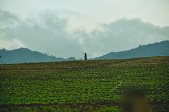 (santiagoshg) Tags: sky photo nikon colombia flickr day foto cielo fotografia hombre antioquia agricultura d5500 nikond5500