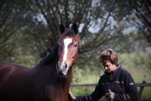 Horses Insight  (25)
