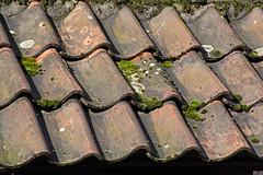 Dachziegel (grasso.gino) Tags: roof nikon dach moos ziegel d5200