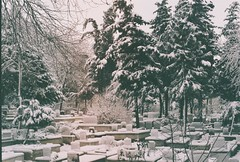 000042 2 (kirmizidemlik) Tags: winter snow cold green film grave graveyard analog 35mm vintage dead 50mm snowy istanbul retro explore 17 analogue tress analogphotography kar expiredfilm xg1 filmphotography minoltaxg1 analogcamera amlca undersnow filmisnotdead filmlmedi