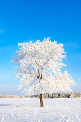 Hoar Frost (Nelepl) Tags: park winter snow canada rural season outdoors countryside scenery frost hoarfrost manitoba jackfrost birdshillpark