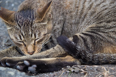 _MG_9636 (Ezra Wu) Tags: cute cat sigma 1750 貓 萌 貓咪 60d