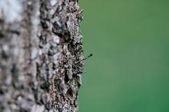 Boom (MJ Klaver) Tags: tree nature dof bokeh depthoffield 135mm shallowdepthoffield sonnar czj carlzeissjena primelens oldlens ausjena manualfocuslens carlzeissjenasonnar135mmf35 ddrlens carlzeissjenasonnar135mmf35mcred