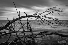 Under the Fallen Tree (kevin-palmer) Tags: blackandwhite lake water monochrome clouds march illinois spring waves great lakemichigan zion 2016 illinoisbeachstatepark kevinpalmer tamron2470mmf28 nikond750