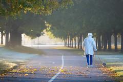 Uppsala, October 17, 2015 (Ulf Bodin) Tags: autumn dog mist fog walking se sweden outdoor autumncolours uppsala sverige höst dimma uppsalalän canoneos5dmarkiii canonef70200mmf28lisiiusm