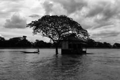 water life (bivAsh das) Tags: life sky people cloud tree water dark boat blackwhite ngc bangladesh boatman saarc