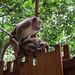 Awkward Monkey Sex