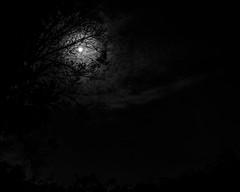 April 21 - Bright Shadows (tete_rs) Tags: trees blackandwhite moon shadows frame fujifilm 365photographyproject x100t