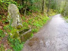 P1600403 (Wanderfotos) Tags: bad bergsee sckingen