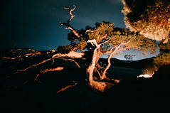 The old pine-tree (Alex Karamanov) Tags: old travel trees sea sky seascape mountains color tree nature silhouette pinetree night clouds stars landscape fire lights mood nightscape outdoor surreal atmosphere bonfire nightsky crimea vsco