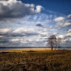 alone (Mris Pehlaks) Tags: blue sky white lake tree nature yellow clouds landscape coast spring outdoor horizon latvia procesing