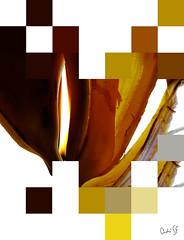 Vela Banana / Banana Candle (AndreSF_Fotografia) Tags: brown white yellow branco illustration square candle banana amarelo vela ilustrao ilustracion quadros marrom