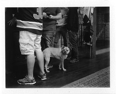 It's All Butts From A Certain Point of View (thereisnocat) Tags: dog beer polaroid newjersey nj brewery carton monmouthcounty atlantichighlands 250 fp3000b cartonbrewing roidweek2016
