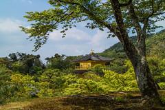 The Golden Pavilion (Roantrum) Tags: japan kyoto kinkakuji goldenpavilion mf16 roantrum