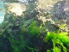 Surge on the FSC seawall (Figgles1) Tags: seaweed beach snorkel south snorkeling algae fremantle groyne southbeach fsc southfremantle fremantlesailingclub p1020052
