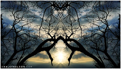 Backdrops Of Infinity (kaleynelson) Tags: trees abstract tree nature landscape meditate symmetry mirrored symmetric symmetrical meditation psychedelic spiritual chakra chakras alexgrey sacredgeometry kaleynelson