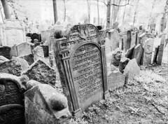Old Jewish Cemetery III (holtelars) Tags: blackandwhite bw 120 film monochrome rollei analog mediumformat 645 prague pentax praha czechrepublic analogue 6x45 gravestones f28 45mm czechia 100iso pentax645 filmphotography rodinalspecial oldjewishcemetery classicblackwhite 645n rpx homeprocessing filmforever smcpentaxfa r09spezial rpx100 rolleirpx100 larsholte compardr09spezial