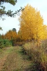 DSC_6021 (Rustam Bikbov) Tags: autumn september 2012    sverdlovskoblast