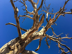 Standing (cbonsig) Tags: california unitedstates joshuatree roadtrip twentyninepalms 2015 roadtrip2015