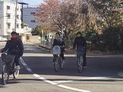 Students (Gai) Tags: street blue school autumn boy red sky girl leaves bike japan maple student kyoto cross sidewalk    middle          enlight