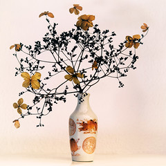 """Hydrangea & Vase"" (helmet13) Tags: d800e raw studies flora hydrangeapetiolaris vase balance plant branch blossom faded labyrinth painted decor stilllife aoi heartaward peaceaward world100f 100faves simplicity"