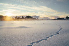 (DrowsyPotato) Tags: sunset cloud sunlight mist lake snow nature clouds zeiss forest 35mm landscape frozen frost cloudy sweden f14 sony tracks swedish explore 180 350 carl 100 sverige mm fe alpha scandinavia exploration za forests jmtland norrland swe 110 a7rii a7r2 ilce7rm2
