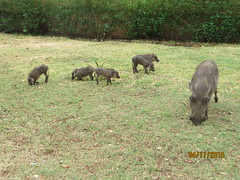 Zimbabwe (296) (Absolute Africa 17/09/2015 Overlanding Tour) Tags: africa2015