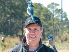 IMG_3470 (Bill Jelen) Tags: birding scrubjay rockledge