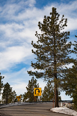 Curve (DezAri Photography) Tags: road trees winter sky snow tree colors sign pine outside losangeles highway outdoor bluesky roadtrip nationalforest barrier curve winterwonderland angelesnationalforest windingroad