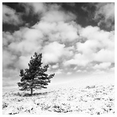 44/366 2016 Tree in the Snow (Sarah*Rose) Tags: sky snow tree clouds scotland aberdeenshire hills lone nofilter