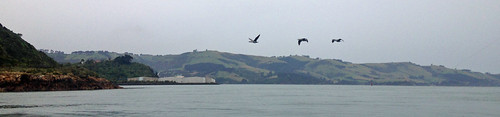 Fishing Otago Harbour