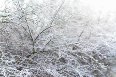 Frozen Intricacies (Vemsteroo) Tags: uk morning trees winter cold tree ice nature sunrise canon landscape frozen bush birmingham frost hoarfrost branches fineart 85mm system foliage 5d 12 westmidlands treescape intricate wideopen mkiii