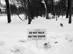 Do not walk on the grass!!! (Suicidal_zombie) Tags: park winter snow grass stpetersburg russia catherine saintpetersburg russie pushkin