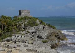 (Dalia itzko) Tags: mar iguana zona arqueologica