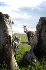 Caballo entre luces y sombras / Horse between light and shadow (Jorge.B.H) Tags: light shadow sky horse naturaleza nature animal caballo earth lawn cielo animales trunks troncos tierra cesped
