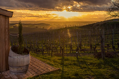 Sunset (Che Camera) Tags: sunset backlight de landscape deutschland vineyard sonnenuntergang wine landschaft elsass kaiserstuhl wein weinberg gegenlicht steinbuck bischoffingen rheinebene badenwrttemberg vogtsburg vogesen sonyalpha7 oberrheinebene vogtsburgimkaiserstuhl teamsony ef24105f40lis ilce7 rhinevally
