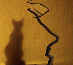 ombre chat (buch.daniele) Tags: jaune chat ombre yelow toile branche