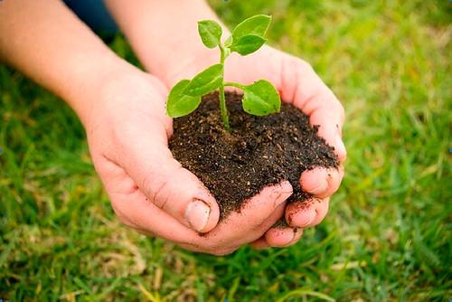 Curso de Horticultura Ecológica