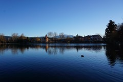 L'estany a l'hivern (joansanchezpi) Tags: winter lake snow duck catalunya llac pirinees pirineu hivern puigcerd masella nec
