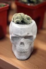Perfect pot for Mammillaria elongata f. cristata (pazzapped) Tags: cactus fun joke brain pot cristata mammillaria elongata