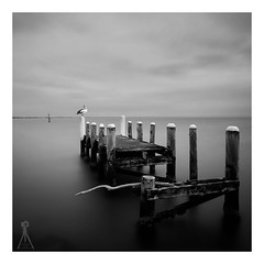 THE DAYDREAMER (Vaughan Laws Photography | www.lawsphotography.com) Tags: longexposure blackandwhite bw seascape bird monochrome square landscape mono pier photo outdoor jetty pelican le luck lucky squareformat stick boarder ndfilter daytimelongexposure neutraldensityfilter blackandwhitefineart nd10stop lawsphotography vaughanlaws longexposurebwfineart
