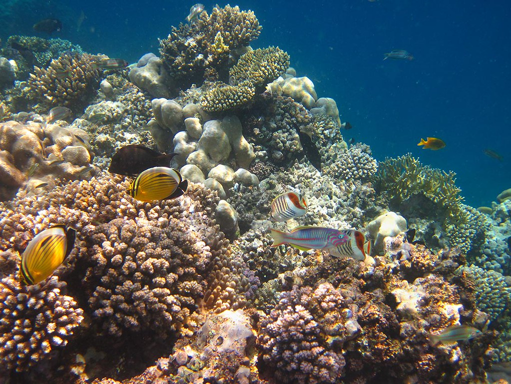 coral divers resort five forces essays and term papers Business: 7141 - 7170 free term papers and college essay examples forces influencing business in the 21st century week 1 coral divers motivation tianjin.