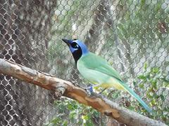 DSCF0374 (rgmccarty) Tags: animal zoo ftworthzoo beautifulbird