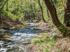 Spring river (Francesco Ganzetti) Tags: trees light italy green art nature water beautiful forest river landscape spring focus long olympus panasonic natures naturemasterclass