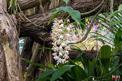 Orchideeën Hoeve (Richard van Hilten) Tags: holland thenetherlands flevoland orchideeënhoeve bloemenenplanten
