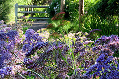 8 a.m. on a hot April morning (Bennilover) Tags: morning flowers dog hot sunshine fence walking buddy trail april labradoodle benni dogwalking fenceposts