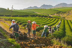 K3488.0112.Tn Lp.Mc Chu.Sn La (hoanglongphoto) Tags: life morning people color canon asian asia tea outdoor hill vietnam dailylife sulight farmhand sunnymorning colorimage snla nng agriculturalist vietnamlife cucsng canonef2470mmf28lusmlens ithng grouppeople ngoitri tybc ngni canoneos1dsmarkiii conngi chu mcchu teatreehill vietnamnorth ngnam ich buisng nngsm cucsnghngngy tnlp vietnamdailylife nhmngi cucsngvitnam cngnhnnngtrngch