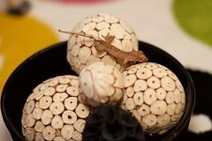 Poppy 5/16 (Florence Ivy) Tags: reptile lizard gecko babyanimal crestedgecko