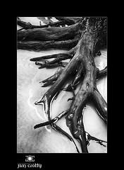 Tidal Expressions by Jim Crotty (jimcrotty.com) Tags: light shadow blackandwhite texture beach nature beauty canon details southcarolina coastal simplicity form canoneos tidal huntingisland jimcrotty niksilverefexpro