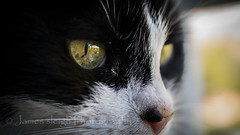 Nikon d5300 macro (Jasrmcf) Tags: iris cats beautiful cat nikon dof bokeh nikkor catseye eys bokehlicious